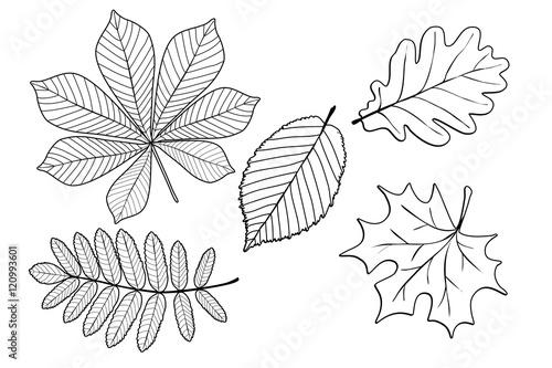 Malvorlagen Kostenlos Herbst Blätter My Blog