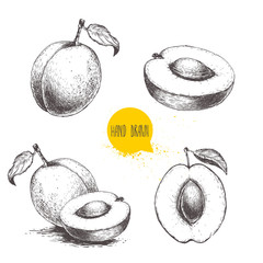 Hand drawn ripe apricots set isolated on white background. Retro sketch style vector eco food illustration.
