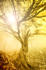 Mist in the mountain forest. Turkey.