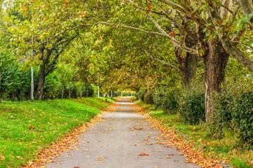 path in foliage