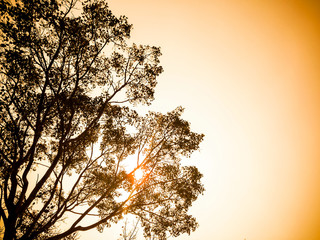 silhouette of bodhi tree in warm tone