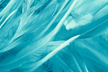 Bohemian boho style green turquoise vintage color trends chicken feather texture background