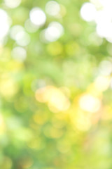 Texture bokeh style , Green natural bokeh background