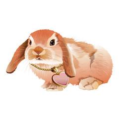 Pink Rabbit Illustration
