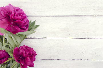 Red peony flower on white rustic wooden background