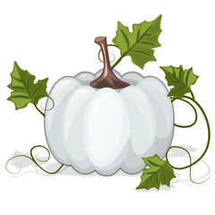 Autumn White Pumpkin Vegetable in vector illustration