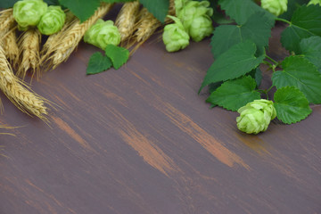 hop cones, ears of corn on the wooden background. Close-up.