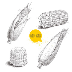 Hand drawn sketch style set of corn vegetable. Corncob with leafs. Organic cereal vector illustration. Sweetcorn food.