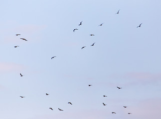 a flock of birds in the sky