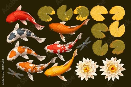 Set of koi fish and lotus