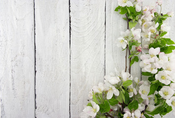 Foto op Canvas Bloemen Spring apple tree blossom on rustic wooden background with space