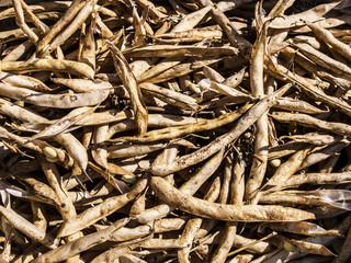 legumi fagioli essiccati al sole