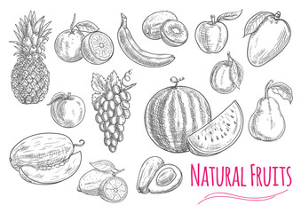 Sweet fresh fruits isolated sketches
