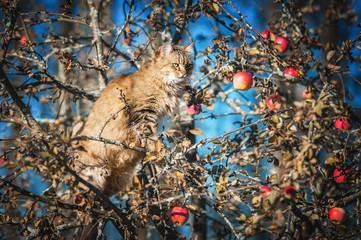 Cat sitting on the apple tree in autumn