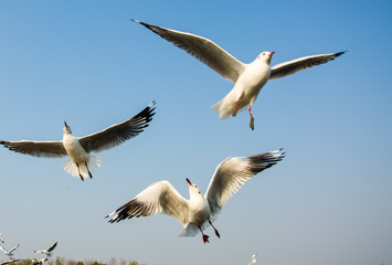 Seagulls flying on the sea.