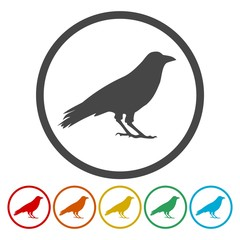 Crow vector illustration design, Crow circle silhouette