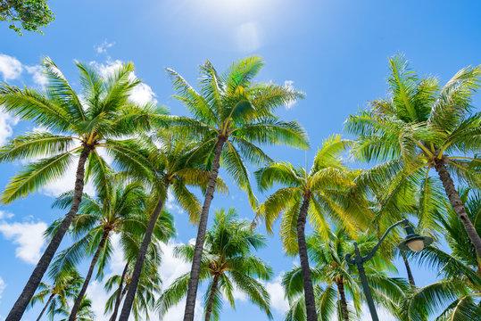 ハワイ 夏休み