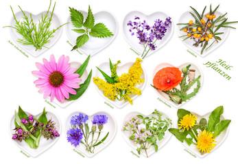 Homöopathie und Kochen mit Heilkräutern 2