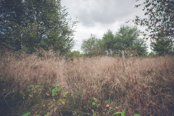 Tall grass in the fall on a meadow