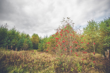 Red berries in autumn in a park