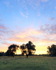 sunset over the oak grove