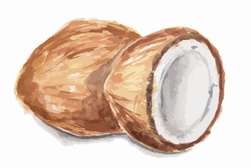 Isolated watercolor coconut on white background. Sweet and nice nut with milk and oil.