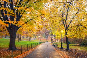 Canvas Prints Autumn Central park at foggy morning, New York City, USA