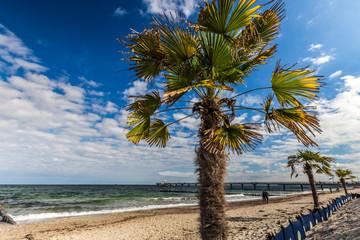 palmenstrand von heiligendamm