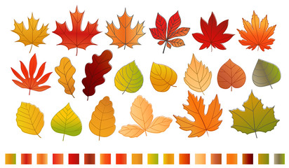 Different color autumn leaves vector collection. Leaves isolated