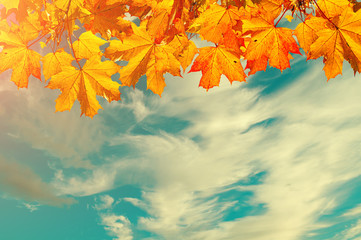 Autumn nature background with space for text - orange autumn maple leaves against sunset sky. Vintage tones applied