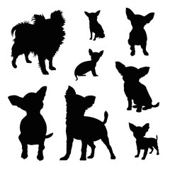 chihuahua silhouette illustration set