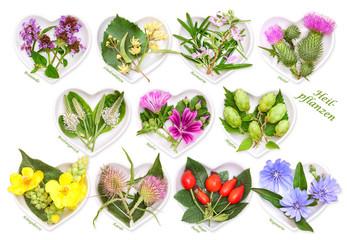 Alternativmedizin mit Heilpflanzen 3