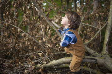Outdoor portrait of a young boy looking up at the forest while climbing on a fallen tree.