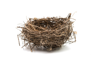 bird's nest isolated