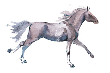 watercolor drawing of jogging horse, young mustang doing dogtrot aquarelle painting