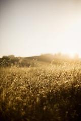 Sun shining on a grassy field.