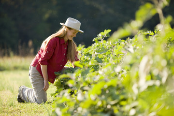 Mid-adult woman wearing a hat while picking vegetables in a field.