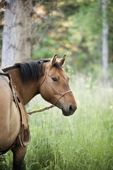 Horse standing in long grass in a forest.