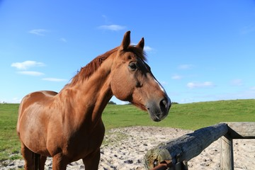 brown horse on green field,