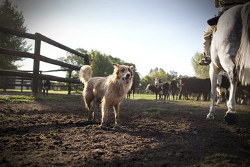 Side view of a pet dog near a horse.