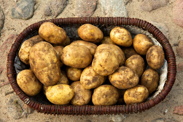 A basket full of potatoes on the stones