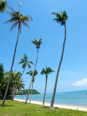 Palm trees on the beach on the island of Koh Samui in Thailand
