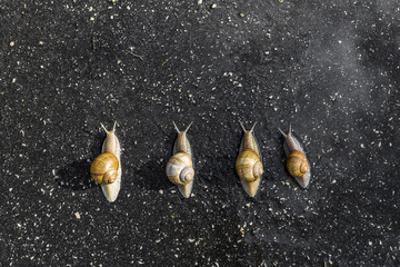 Snail run, animal funny concept, fast competition