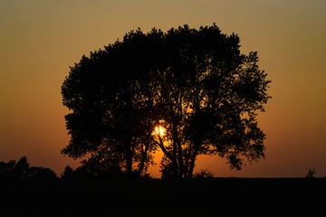 Silhouette von einem Baum an der Ostsee