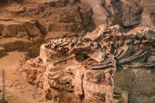 Dinosaur fossil,Skeleton of dinosaur fossil,Old dinosaur fossil,Dinosaur Fossil in rock and sand