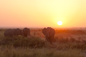 Typical african sunrise with elephants silhouettes in Masai Mara