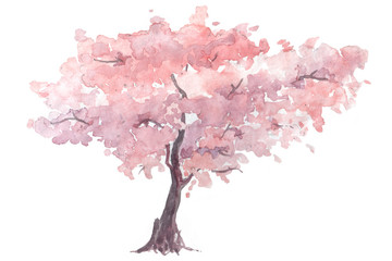cherry trees watercolor illustration