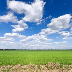 clouds over the field/ bright summer photo Ukraine