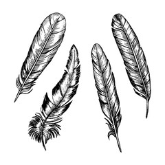 Feathers Set Hand Draw Sketch. Vector