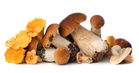Fototapeta Wild Foraged Mushroom selection isolated on white background, with shadow. Boletus Edulis mushrooms obraz